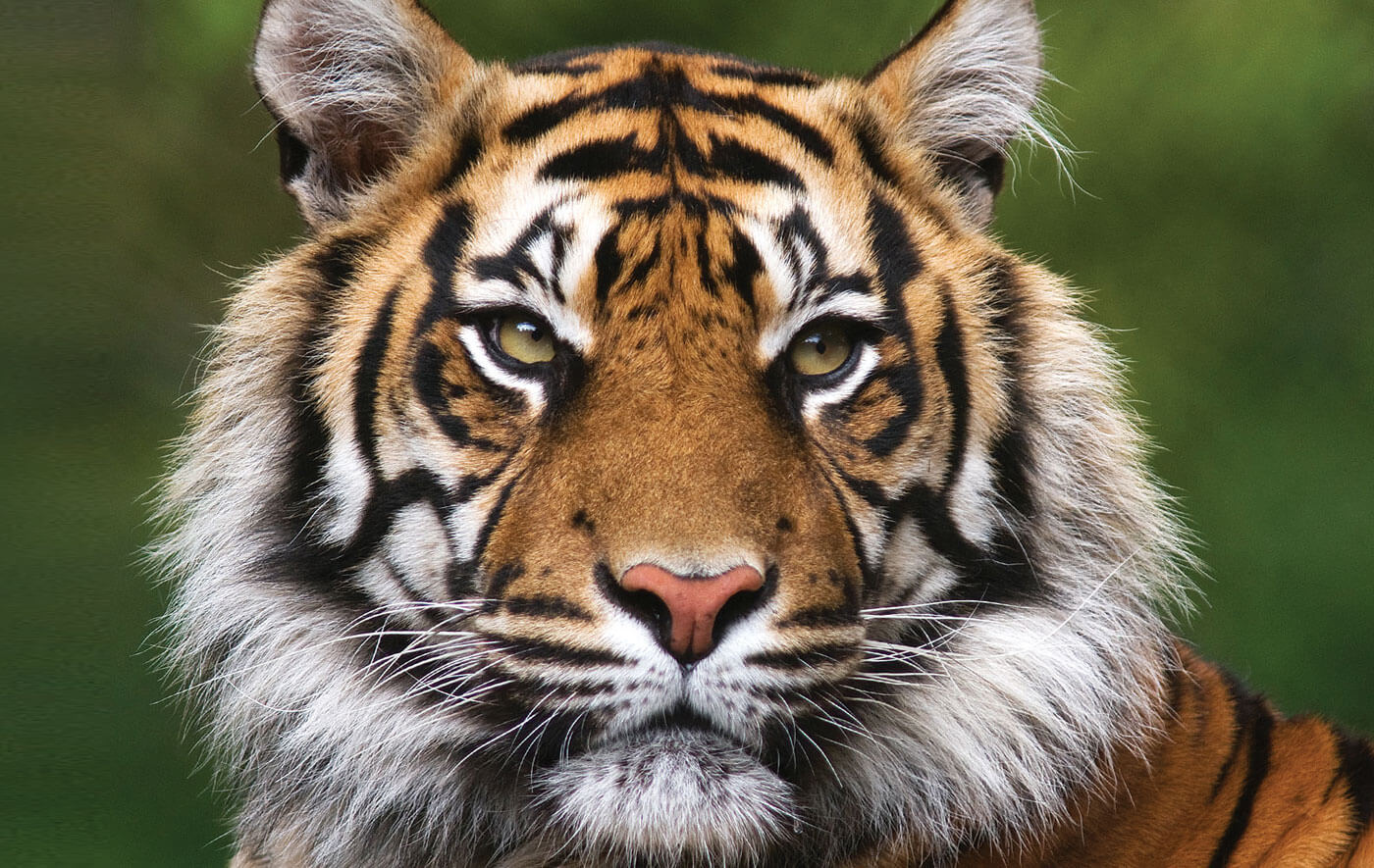 Food Chain Management Key To Avert Human-Wildlife Conflict