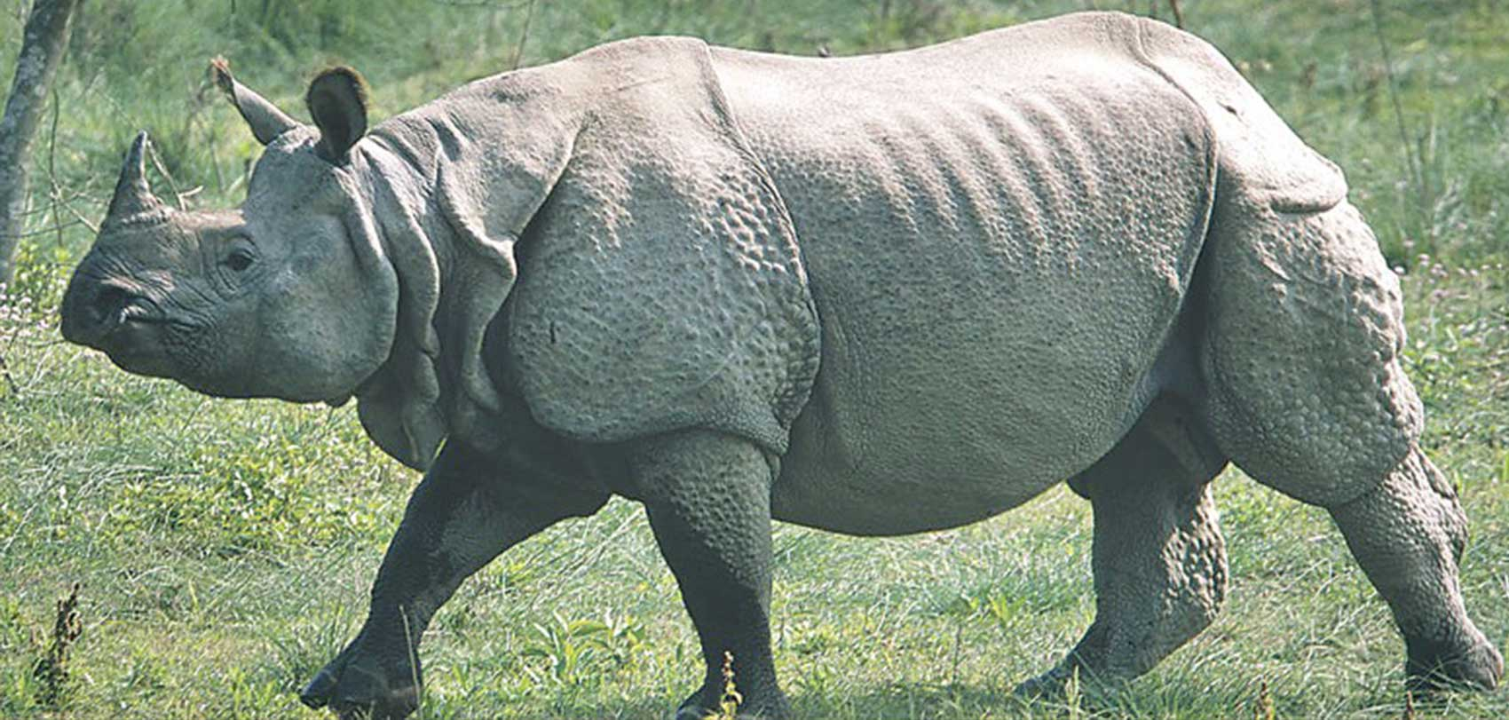 Nepal All Set To Conduct National Rhino Census This Winter