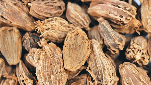 Declining Cardamom Price Dejects Farmers