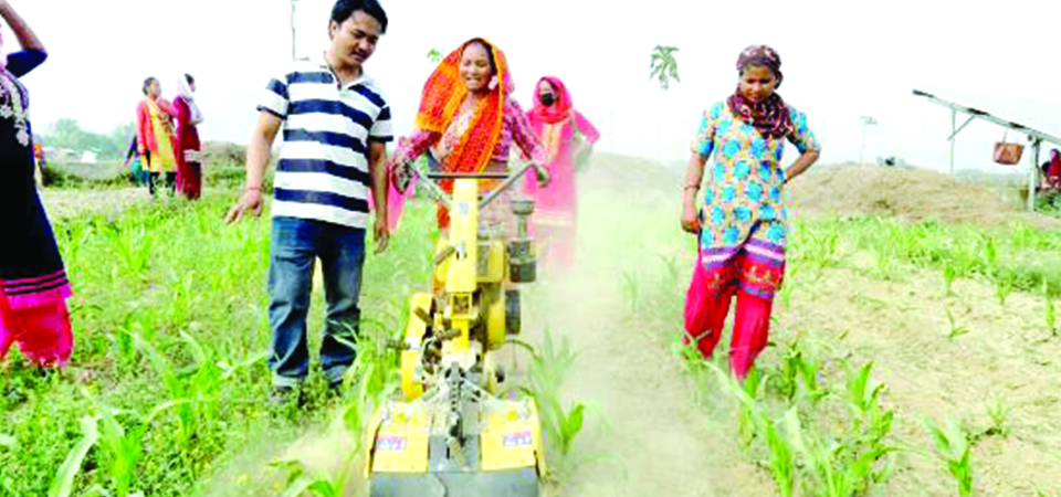 Nepali Agriculture: From Manual Labour To Mechanisation